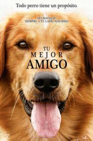 Tu mejor amigo (A Dog's Purpose)